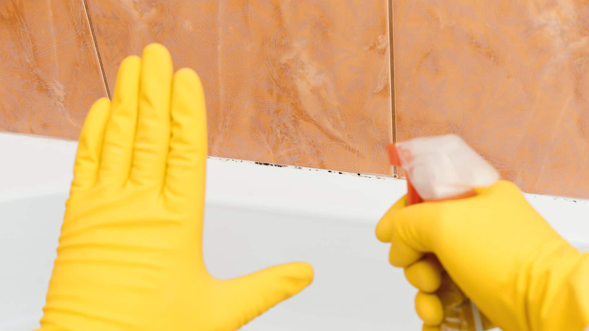does vinegar kill mold