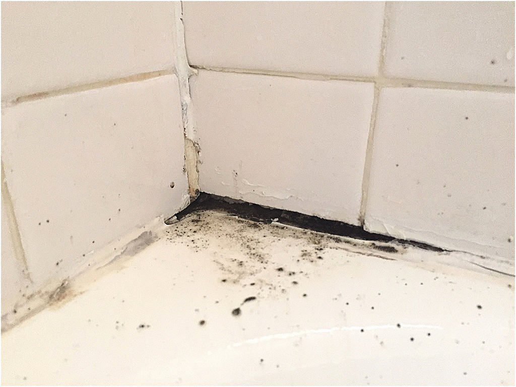 black mold in bathroom
