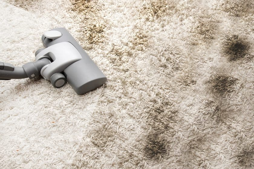 Effective Guide On How To Get Mold Out Of Carpet