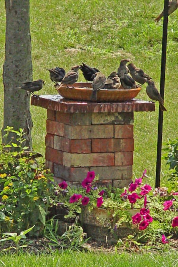 Simple Bricks Bird Bath