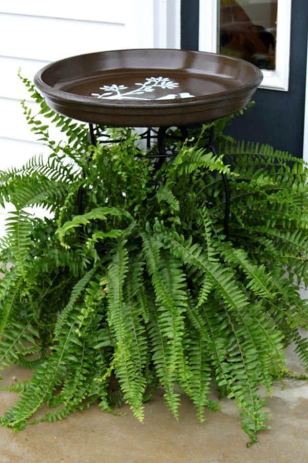 Plant Stand Bird Bath