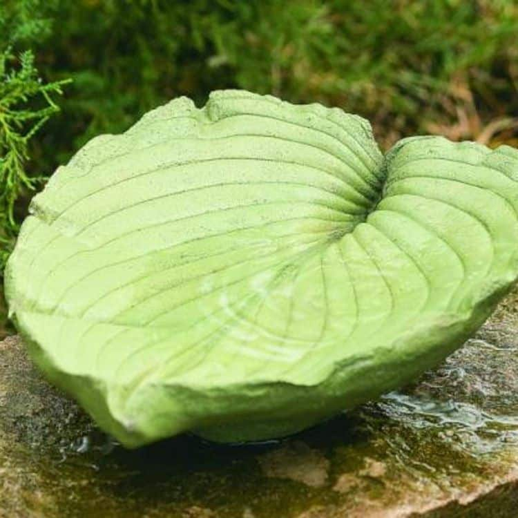 Green Leaf Bird Bath