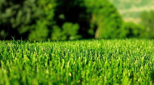 Reasons to Have a Healthy Lawn in your Home