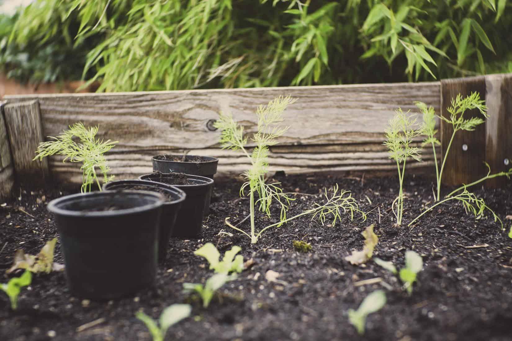 Reclaimed Materials in Your Home Garden