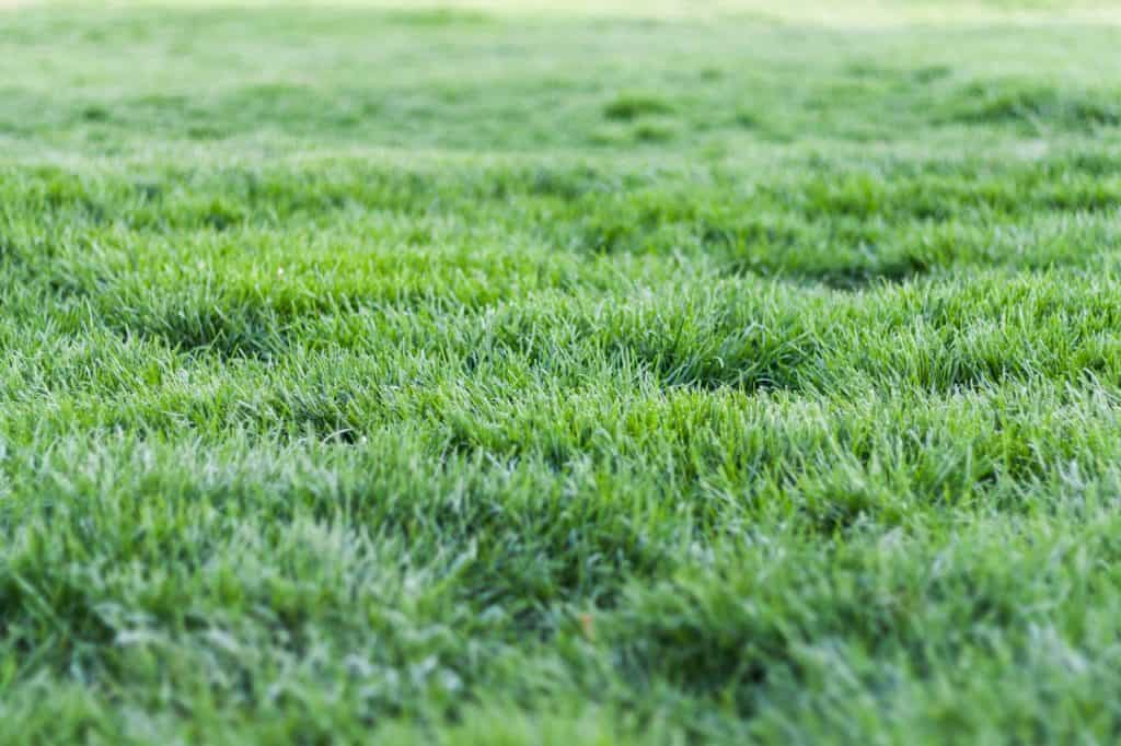 How to Make Your Lawn Green All Year in East Texas