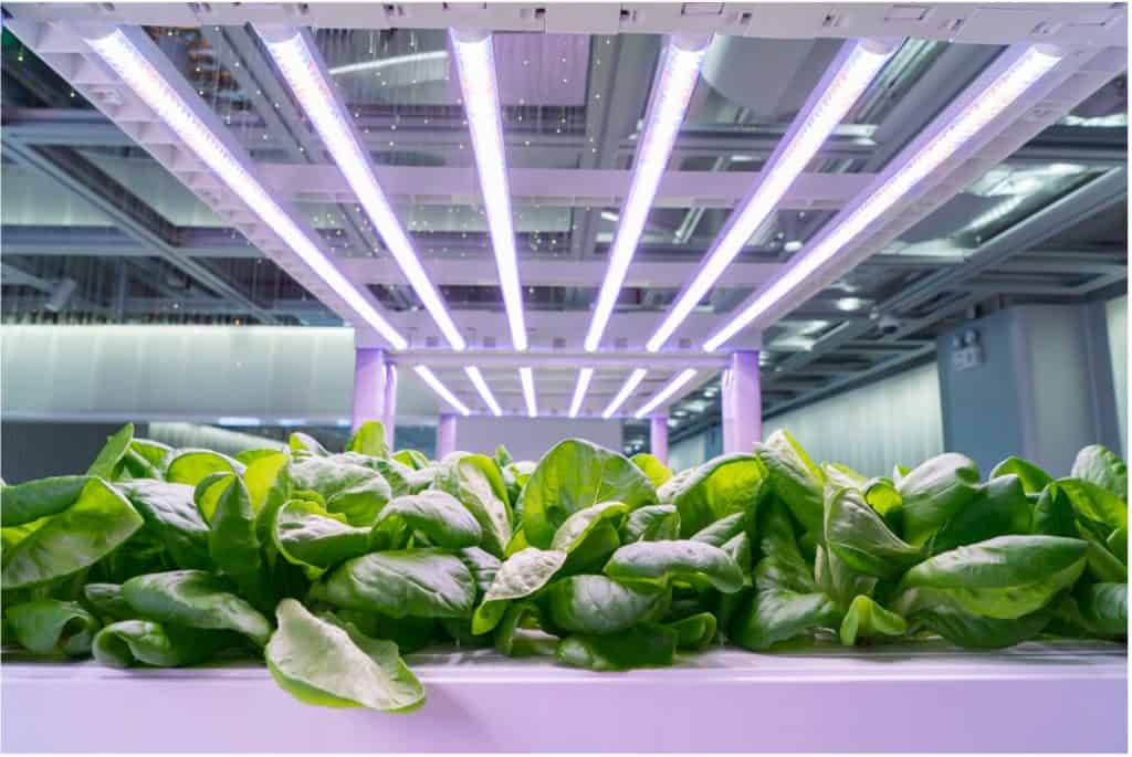 Things You Must Know Before Buying LED Grow Lights